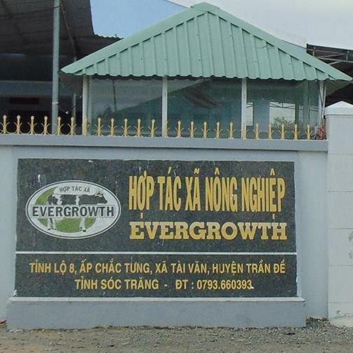 HTX bò sữa Evergrowth ở Sóc Trăng: Luôn đặt mục tiêu hoạt động minh bạch, rõ ràng